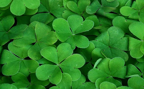 Shamrocks, which are usually associated with Ireland like St. Patrick's Day.